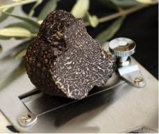 Truffe noire du Vaucluse