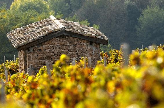 Vignoble de Beaujolais-Blanc Domaine des Marrans
