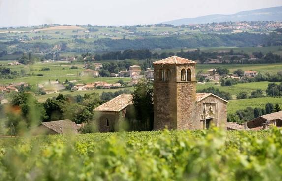 Vignoble de Beaujolais-Villages à La Chapelle de Chevenne