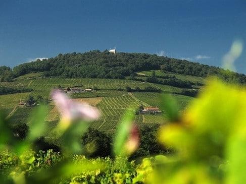 Vignoble de côte-de-brouilly