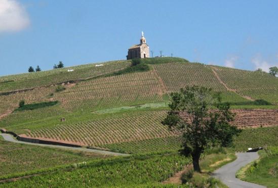 Vignoble de Fleurie, domaine de la Madone
