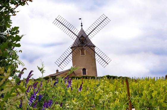Vignoble de Moulin-à-vent