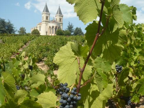 Vignoble de régnié Domaine de Joncy