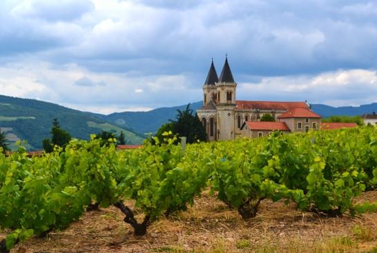 Vignoble de Régnié entourant l'église de Régnié