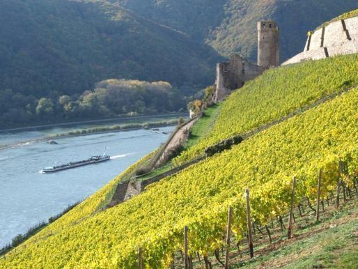 Vignobles surplombant la vallée du Rhin