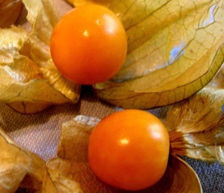 Alkékenge (fruits)