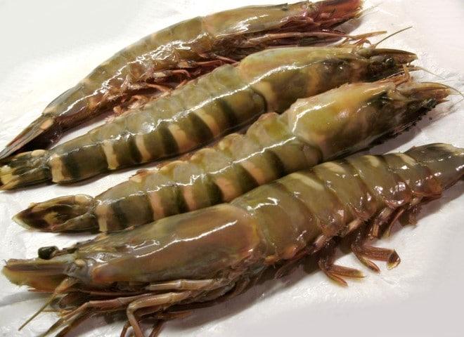 Crevettes cameron