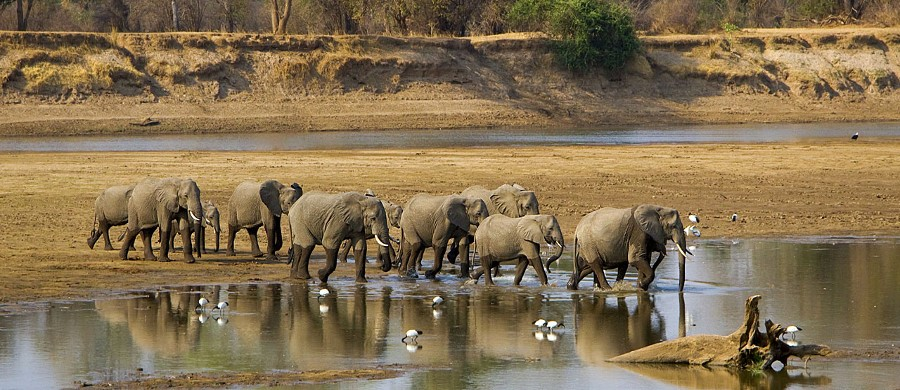 Parc national de South Luangwa