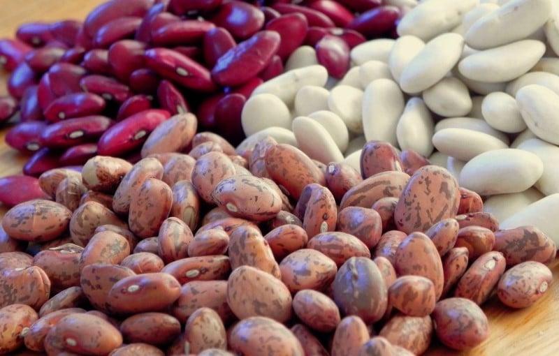 Haricots en grains