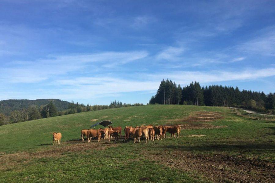Le Limousin, Parc naturel de Millevaches