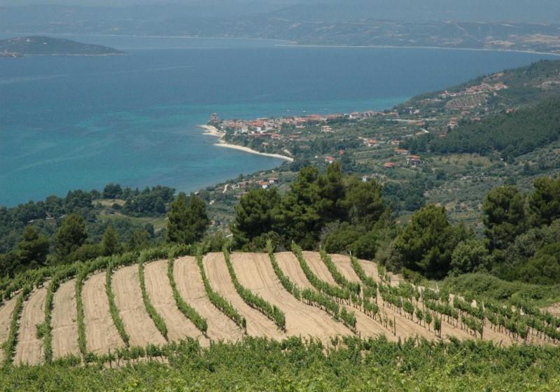 Vigne d'altitude en Grèce